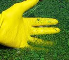 сине-зеленые водросли